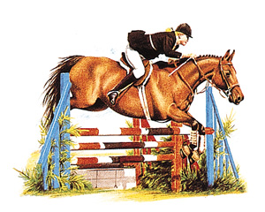Horse - Show Jumping