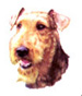 Dog  Airedale Terrier