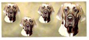 Dog Wrap - Great Dane
