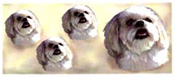 Dog Wrap - Lhasa Apso