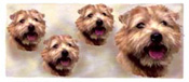 Dog Wrap - Norfolk Terrier