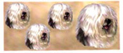 Dog Wrap - Old English Sheepdog