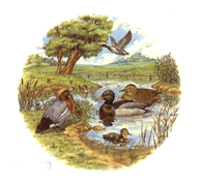 Duck Pond ACCENT SHEET