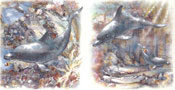 Dolphin Scene Set of 2