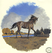 Horse - Trotter