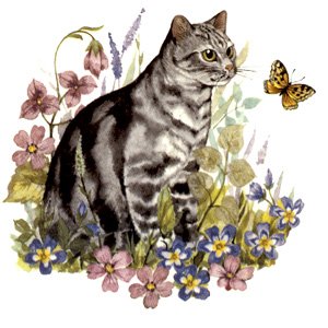 Cats -Grey Tabby Purr-fect