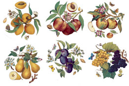 Butterfly Butterflies Fruit - Pears, Apples, Plums, Grapes, Peaches, Figs