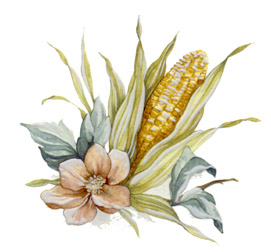 Corn and Sunflower - Corn