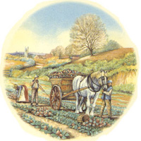 Autumn Harvest with Horse and Wagon