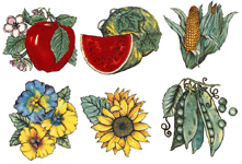 Corn, Sunflower, Watermelon, Peas, Apple, Pansies