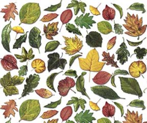 Leaf Overall Chintz