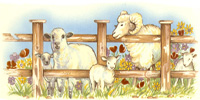 Animal Farm Wrap Sheep & Ram